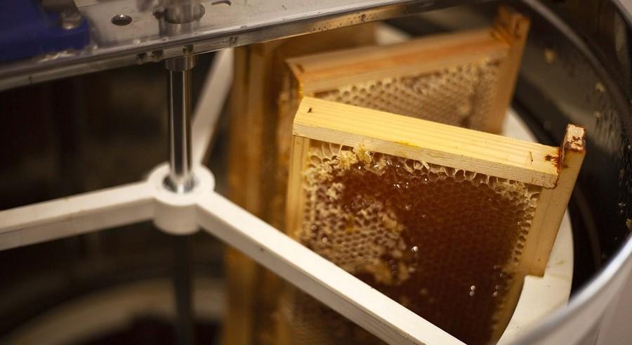 Récolte de miel au Grand Séchoir